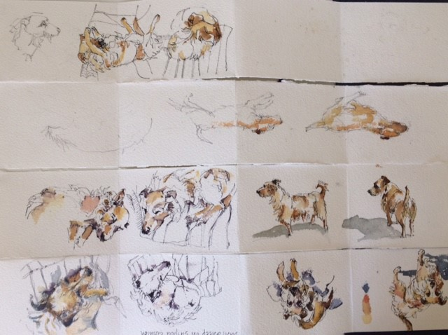 sketches of Basil the terrier